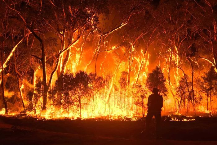 After more than 240 days, New South Wales is finally free from bushfires